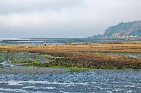 November Low Tide